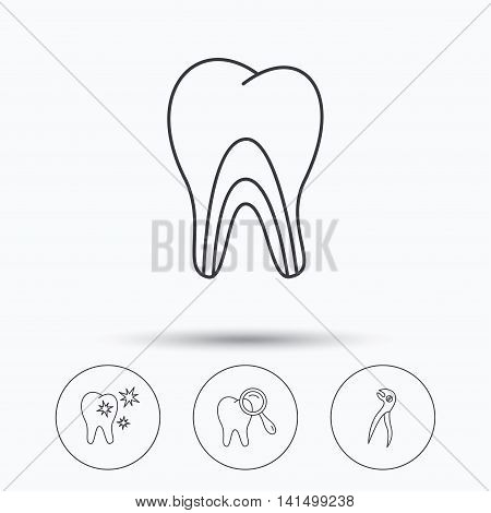 Healthy teeth, dentinal tubules and pliers icons. Dental diagnostics linear sign. Linear icons in circle buttons. Flat web symbols. Vector