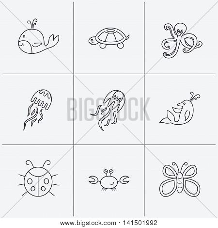 Octopus, turtle and dolphin icons. Jellyfish, whale and ladybug linear signs. Crab, butterfly flat line icons. Linear icons on white background. Vector