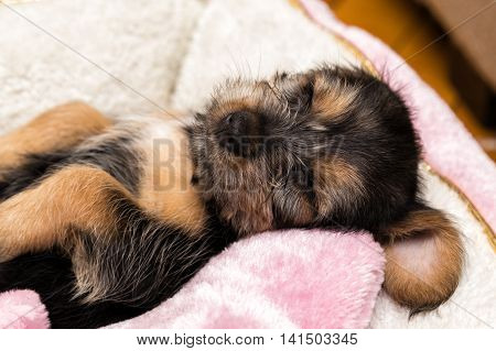 A little and comfortable puppy taking a nap