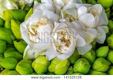White lotus flower lotus flower petal buddhism background nature decoration,