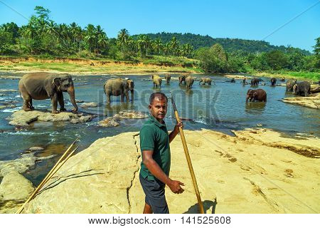 Family Asia Elephant Bath In River Ceylon Pinnawala