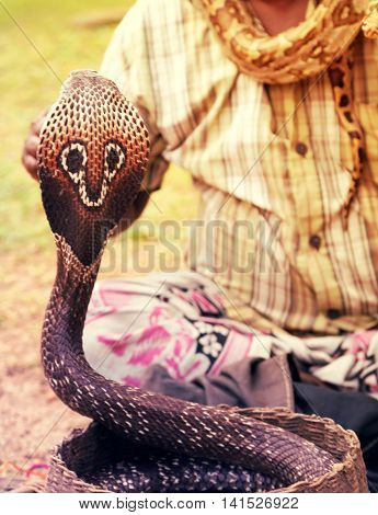Snake charmer adult man playing on musical instrument before snake at a basket