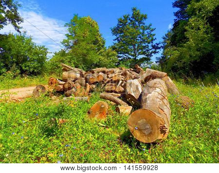 Wood logs on meadow near deciduous forest after wood exploitation