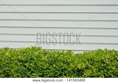 green bush and wood panels used as wall cover