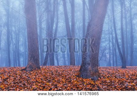 Foggy autumn gothic landscape - autumn bare trees in the deserted autumn park in dense fog. Mysterious autumn view of autumn park in somber autumn weather