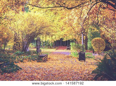 Fall park path with vibrant yelow fallen leaves and tree, retro toned