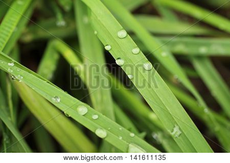 close photo of some blades of grass with drops of water