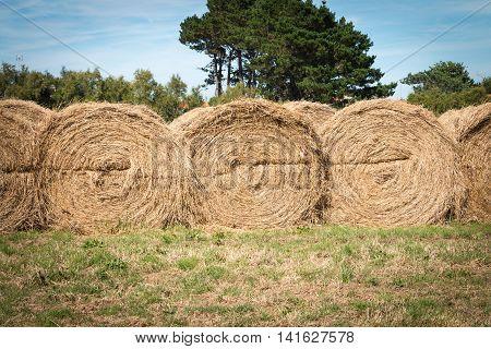 Haystack Aligned In A Field