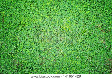 Top view of green grass background with water drops.