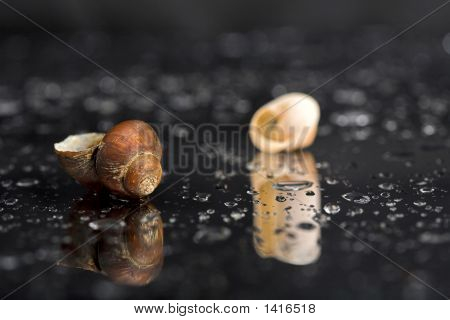 Still Life With Two Shells.