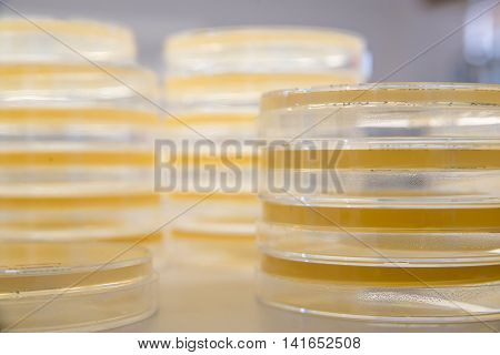 Stacks of sterile agar plates also known as petri dishes ready to be used for bacterial culture. Science and medicine concept.