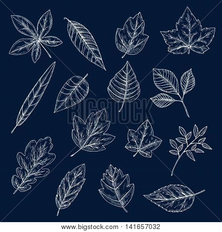 Chalk leaves of maple, oak, olive, chestnut, sycamore, elm, birch, willow, cherry and beech trees. Foliage chalk silhouettes for nature theme or ecology design