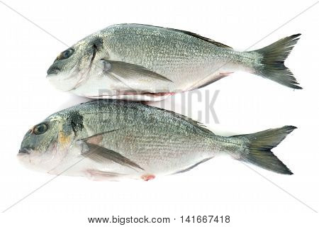 Gilt-head bream in front of white background