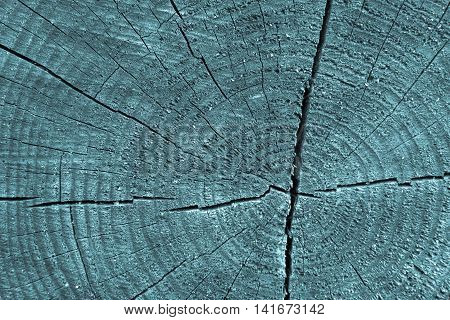 wooden transverse texture with cracks on the old stump closeup for a natural abstract background of blue color