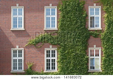 poster of Windows entwined with wild grapes in the Wawel castle. Krakow. Poland