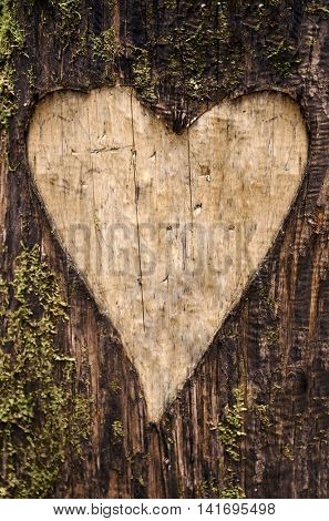 Heart-shaped carving on a tree bark with moss