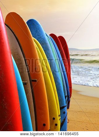 Many colorful surfboards standing together in a beach under warm sunlight