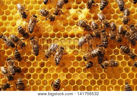 a brood frame - the bees and honeycomb,  workflow