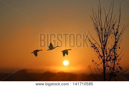 Dreamy fogy landscape with Birds at Sunset