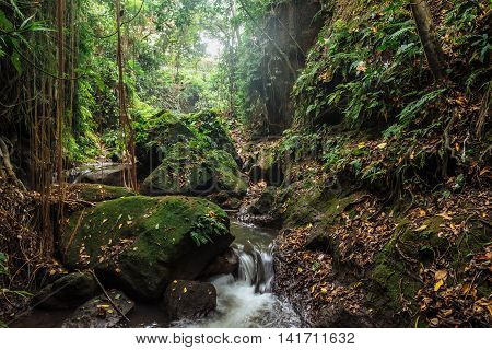Small river in stones of tropical jungle forest at the Sacred Monkey Forest Sanctuary, Ubud, Bali, Indonesia