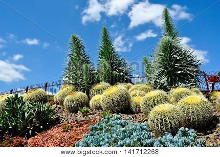Exotic plants in Royal Botanic Gardens Melbourne Australia