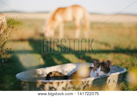 Tricolor Cat In Old Metal Washbasin.