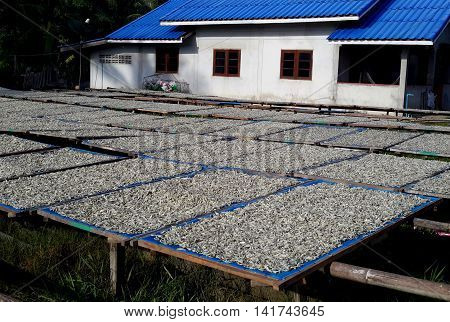 multiple racks of fish drying in the sun on blue tarps beside a white house with blue roof, Songkhla, Thailand