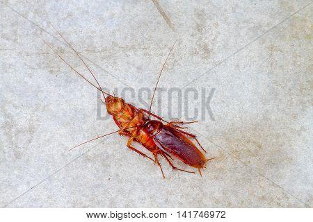 cockroach make love on concrete floor .