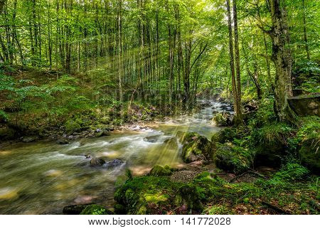 Mountain stream flow through ancient green forest lit with sun rays