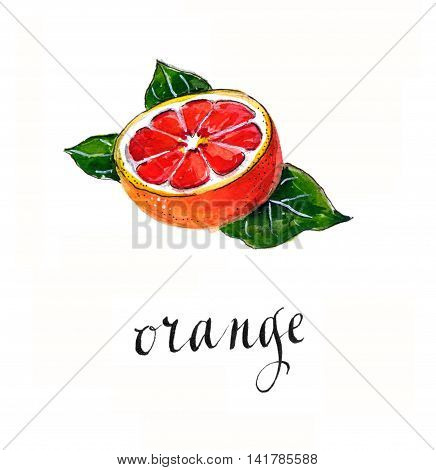 Red orange with leaves hand drawn - watercolor Illustration