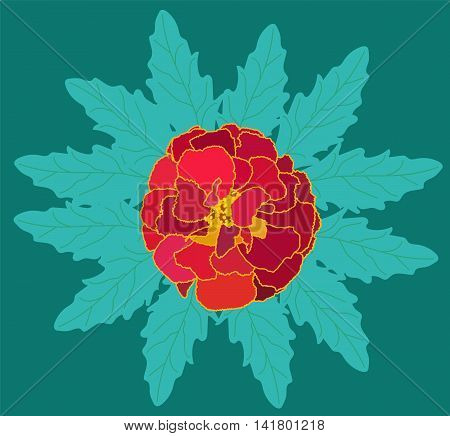 Beautiful Blooming Flower Tagetes with Green Leaves. Vector Illustration. EPS10