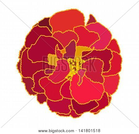 Beautiful Blooming Flower Tagetes on White Background. Vector Illustration. EPS10