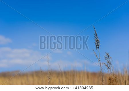 Grass against the sky with clouds and withered grass