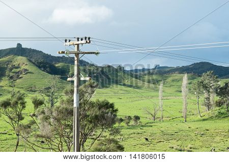 Power or telephone lines in rural Northland New Zealand NZ