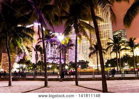 Beautifull Miami Night Urban Landscape and Palm Trees