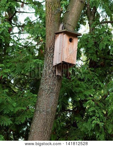 Old starling house on tree. Weathered birdhouse in forest.