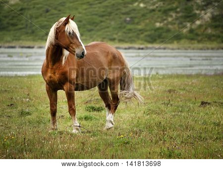 Horse in Altai Mountains, Russian Federation