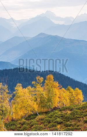 Autumn landscape in the mountains. Birch forest on the slope. Caucasus, Georgia, Zemo Svaneti