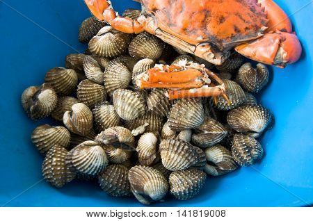 raw of crab and cockles for cooking