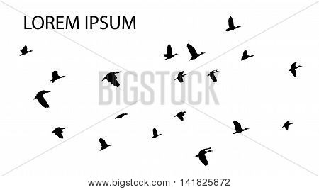 vector illustration of flying birds with copyspace