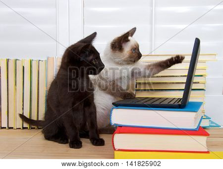 Siamese kitten sitting pointing at screen with one paw other paw on keyboard of miniature laptop type computer stacked on books. Black kitten with green eyes watching intently. Books in background.