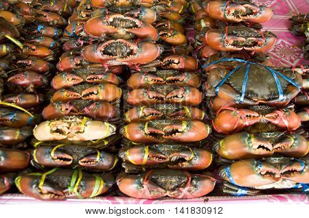 Rows of fresh crab in market for sale