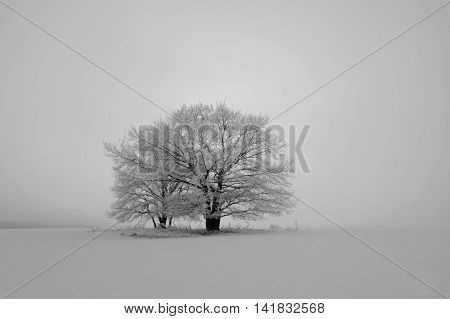 black and white winter landscape with snow-covered trees in the field