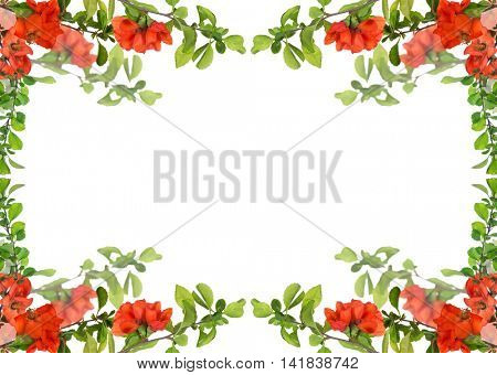 blossoming pomegranate branches frame isolated on white background