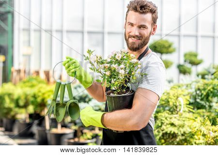 Portrait of a handsome gardener holding a pot with flower in the greenhouse. Plant seller taking care of flowers in the shop