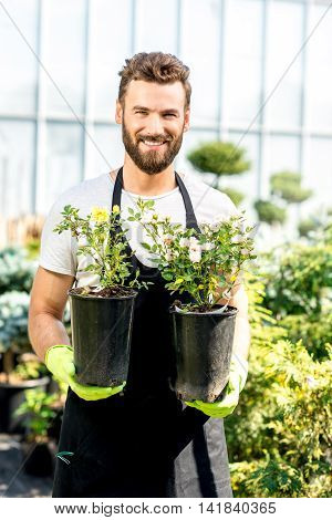 Portrait of a handsome gardener in apron and working gloves holding pots with flowers in the greenhouse. Plant seller taking care of flowers in the shop