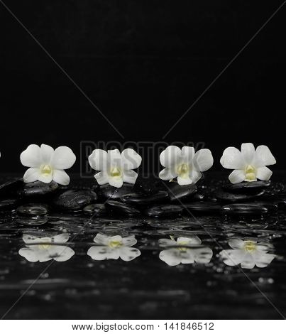 Four orchid blossom with black on wet background