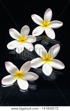 Still life with four frangipani