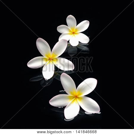 Still life with three frangipani