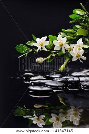 gardenia with therapy stones